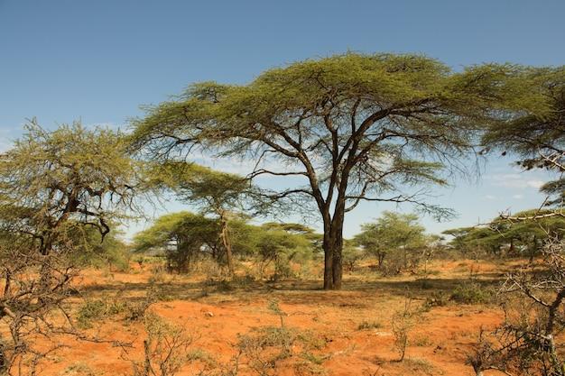 Ethiopisch landschap