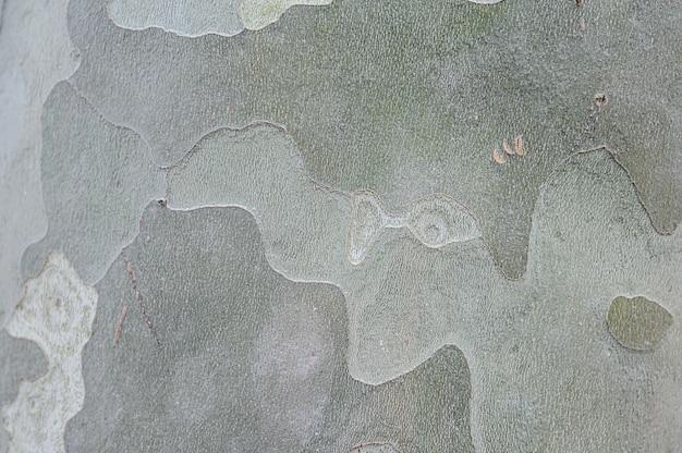 Eucalyptus boomschors textuur, hoge kwaliteit houtstructuur achtergrond