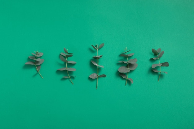 Eucalyptus groene bladeren achtergrond
