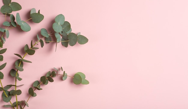 Eucalyptus takken op een witte achtergrond verse eucalyptus bladeren als basis voor cosmetica op basis van natuurlijke oliën en geuren hoge kwaliteit foto
