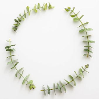 Eucalyptusbladeren gerangschikt in cirkelvormig kader over wit oppervlak