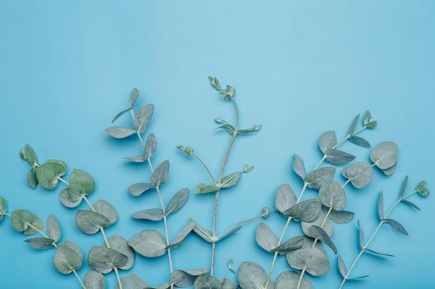 Eucalyptusbladeren op een gekleurde achtergrond