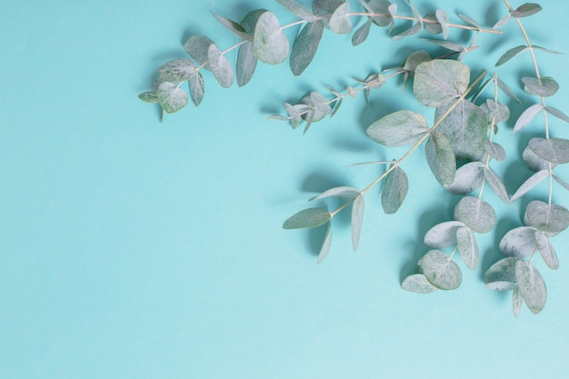Eucalyptusbladeren op papier achtergrond