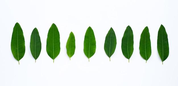 Eucalyptusbladeren op witte achtergrond. kopieer ruimte