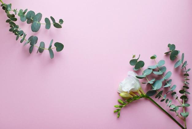 Eucalyptustakken en witte fresiabloemen op een roze ondergrond
