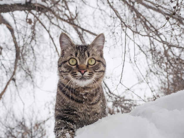 Europese korthaar staat in de sneeuw tegen de muur van een boom.