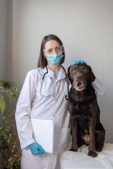 Europese vrouwelijke dierenarts onderzoekt labradorhond op afspraak