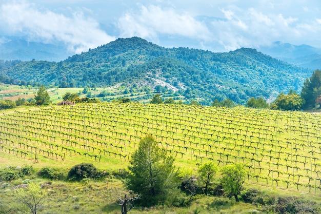 Europese wijngaard bij zonsondergang met bergen op de achtergrond