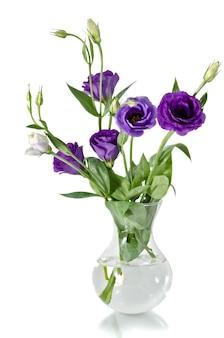Eustoma bloemen