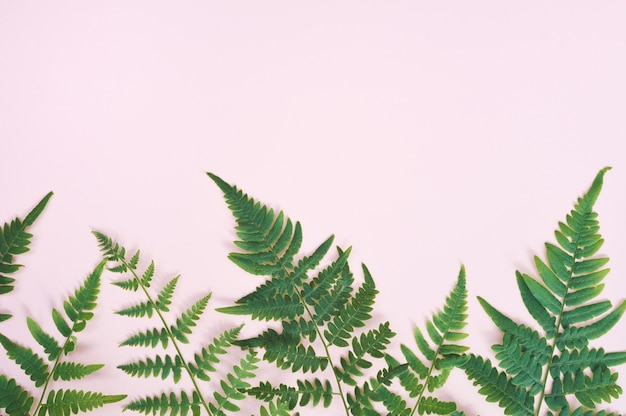 Exotisch natuurlijk varenblad op pastelkleur roze achtergrond, aardachtergrond met copyspace