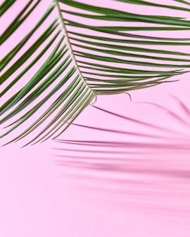 Exotisch palmblad op roze papier met een kopie van de ruimte en weerspiegeling van de schaduwen. natuurlijke indeling