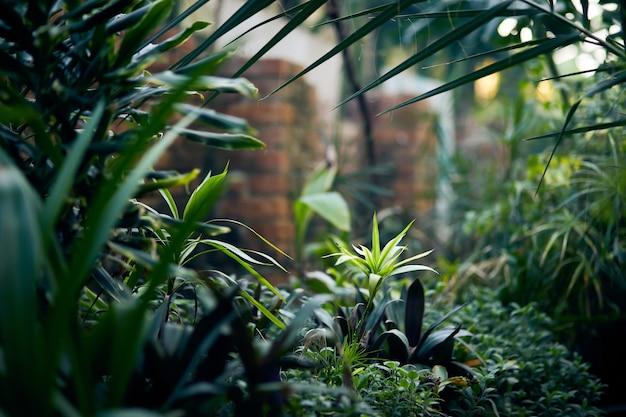 Exotische bomen en planten onder een dak in een kas