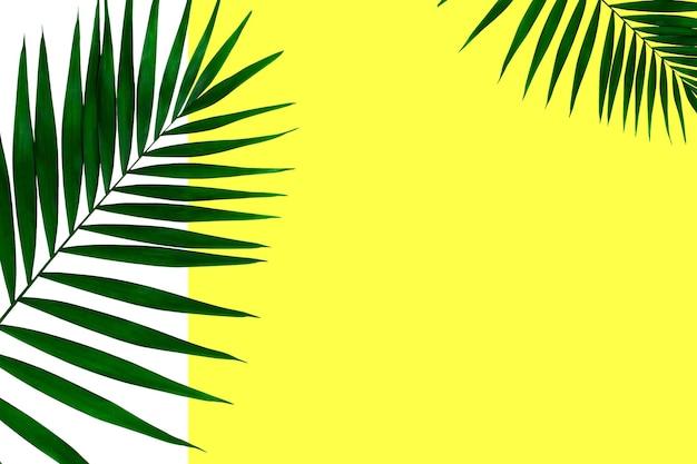 Exotische groene tropische palmbladeren geïsoleerd op een witte gele achtergrond. ontwerp voor uitnodigingskaarten, flyers. abstracte ontwerpsjablonen voor posters, covers, wallpapers met copyspace voor tekst.
