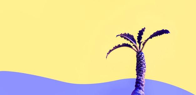 Exotische kleur van dorstenia-cactus op kleurrijke achtergrond.