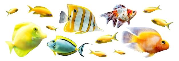 Exotische rifvissen geïsoleerd op wit Premium Foto
