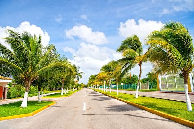 Exotische snelweg grijze weg met groene palmbomen in zonnig winderig weer buiten op blauwe lucht met witte wolken achtergrond