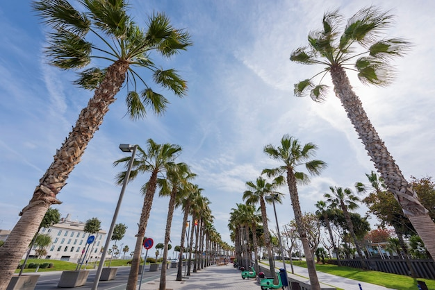 Exotische stoep met palmbomen