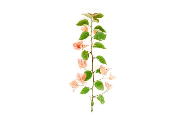 Exotische tropische tak met bloemen geïsoleerd op wit