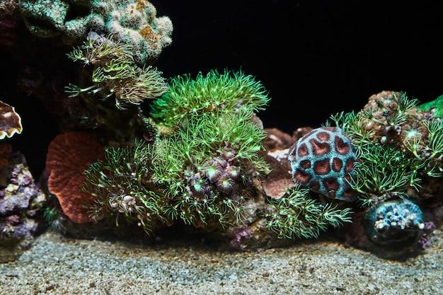 Exotische vissen in het rode zee-aquarium zwemmen in het donker tussen gloeiende koralen