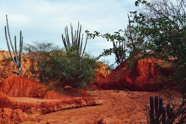 Exotische wilde planten groeien tussen de zanderige rode rotsen in de tatacoa-woestijn, colombia