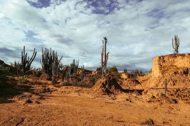Exotische wilde planten groeien tussen de zanderige rotsen in de tatacoa-woestijn, colombia