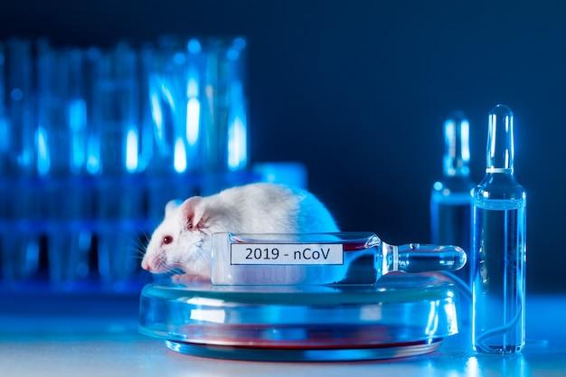 Experimenteer met laboratoriumrat, muis om het coronavirusvaccin in het laboratorium te vinden.