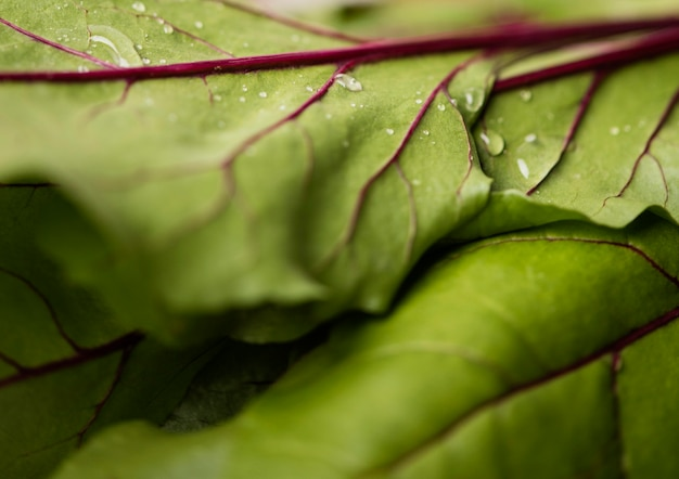 Extreme close-up bladeren van verse snijbiet