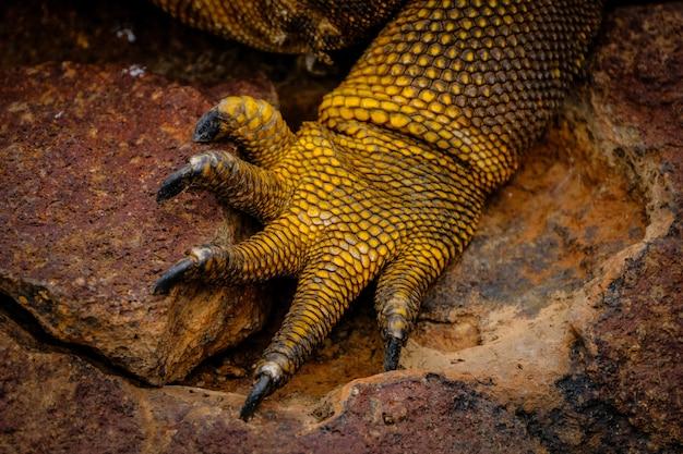 Extreme close-up shot van het been van een gele leguaan