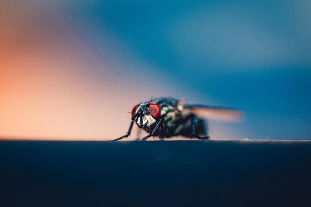 Extreme close-up van huisvlieg die op een oppervlak rust