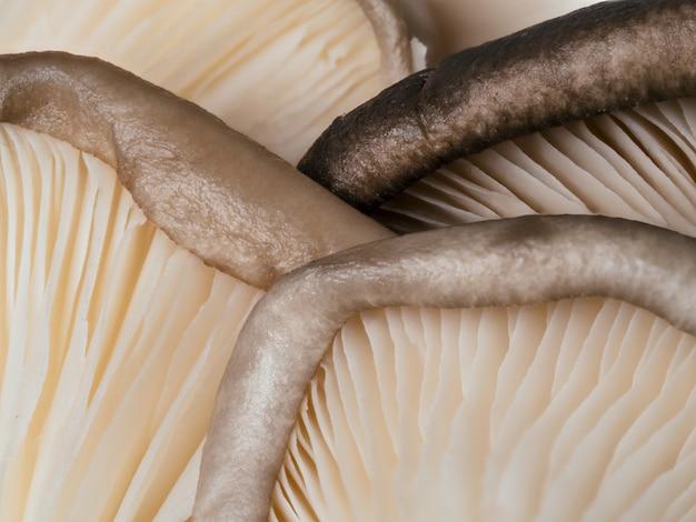 Extreme close-up van oesterzwammen. oesterzwammen met kopie ruimte