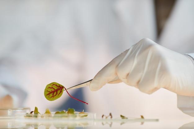 Extreme close-up van onherkenbare vrouwelijke wetenschapper die met plantmonsters werkt tijdens het doen van experimenten in het biotechnologielaboratorium, kopie ruimte