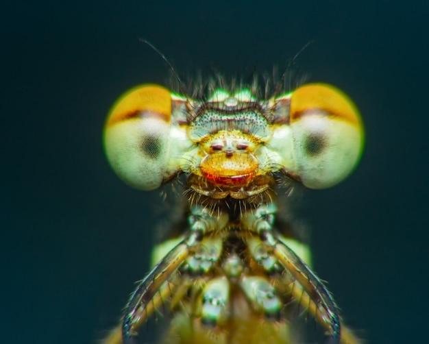Extreme macro-opname oog van zygoptera libel in het wild close-up detail van oog libel is erg smail