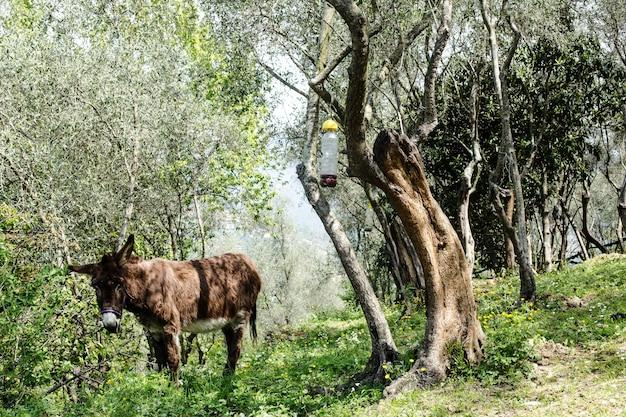 Ezel op landelijke bucolische achtergrond