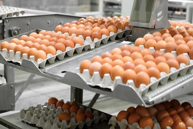 Fabriek productie van kippeneieren. werknemer sorteert kippeneieren op transportband. agribusiness bedrijf.