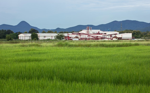 Fabriekslandbouw en de blauwe hemel met plattelandsgebiedpadievelden