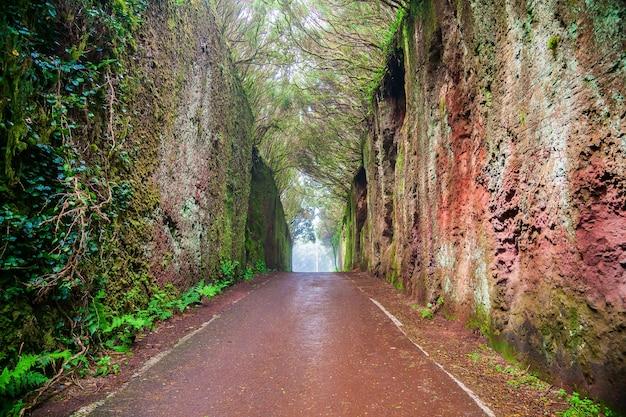 Fairy tunnel in de bossen van rural park anaga in tenerife, canarische eilanden, spanje