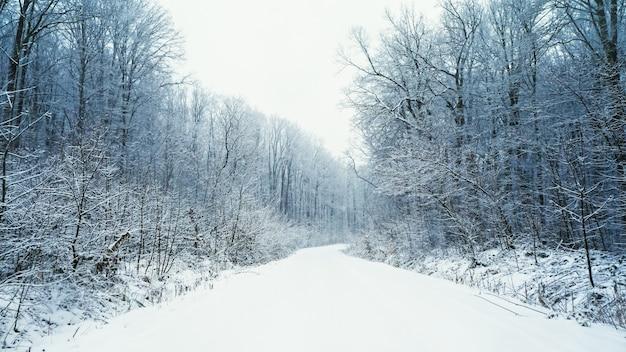 Fairy winter forest in de sneeuw