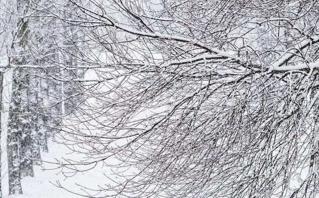 Fairytale pluizige besneeuwde bomen takken natuurlandschap met witte sneeuw en koud weer sneeuwval