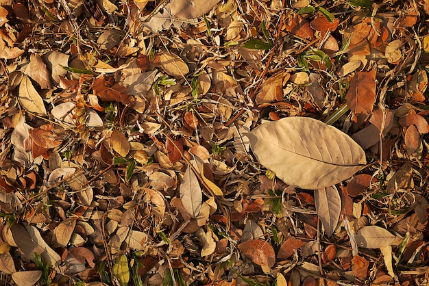Fall pho blad met zacht licht en zachte focus