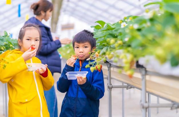 Familie aardbeien eten in een hydrocultuur boerderij