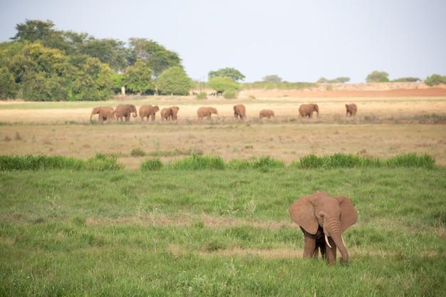 Familie van olifanten lopen op een groen veld