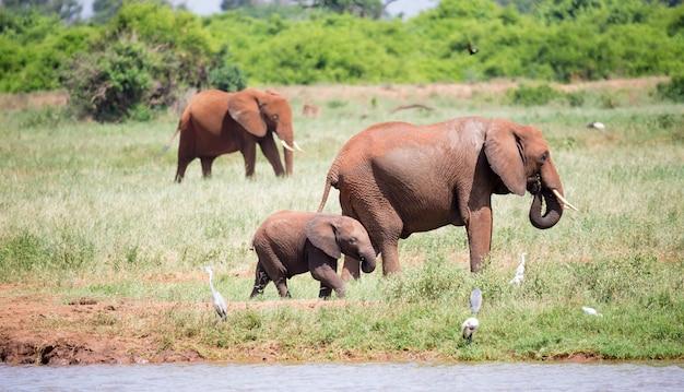 Familie van olifanten wandelen langs een waterput