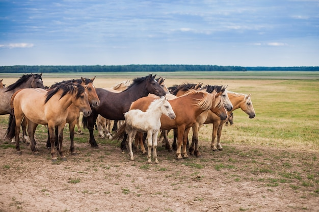 Familie van paarden in het veld