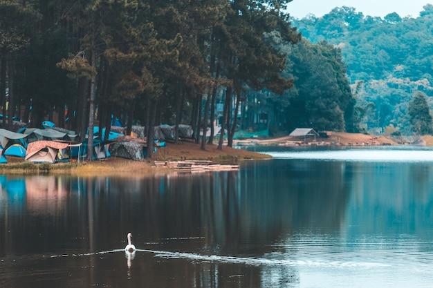 Familie van witte zwaan cygnini en grijze jonge zwanen die op meer in het wild drijven
