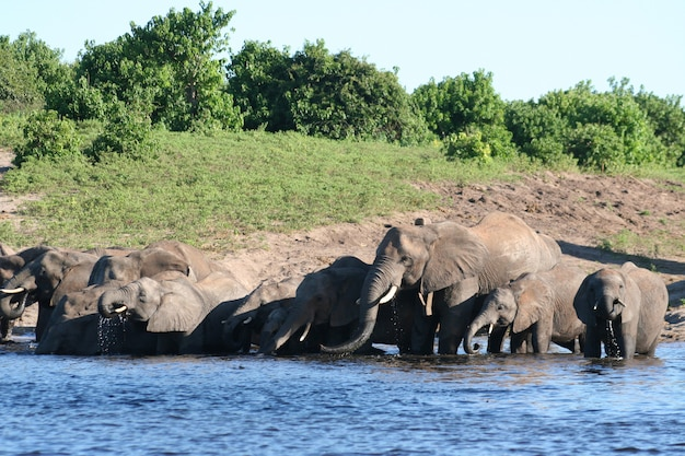 Familyfield met olifanten
