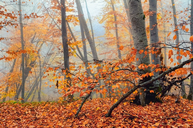 Fantasie mistige bos bomen in de herfst bergen
