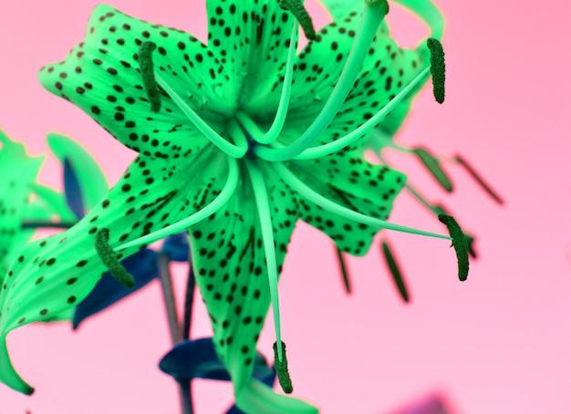 Fantasieeffect mooie kleuren van tuin groen op een roze achtergrond