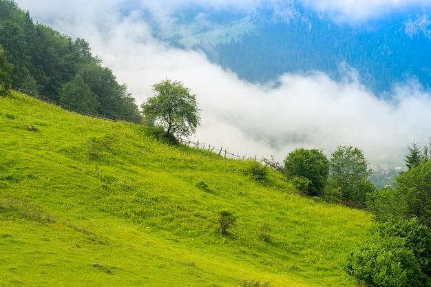 Fantastisch landschap van bergbos in wolken, mist of nevel. giresun highland's - turkije