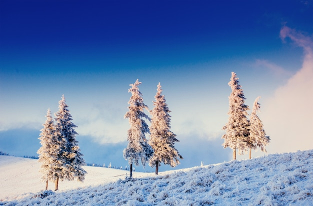 Fantastisch winterlandschap in de bergen van oekraïne. in antic