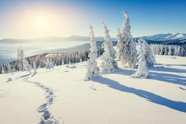Fantastisch winterlandschap. sneeuw bedekt kerstbomen in alpine bergen